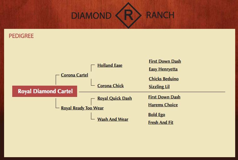 Royal Diamond Cartel - Pedigree